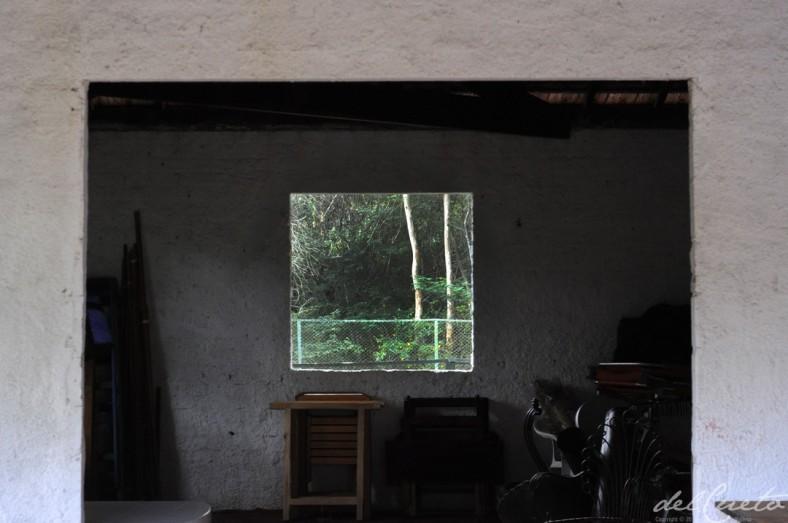 Araras 140406 001 obra janela floresta delirio linda